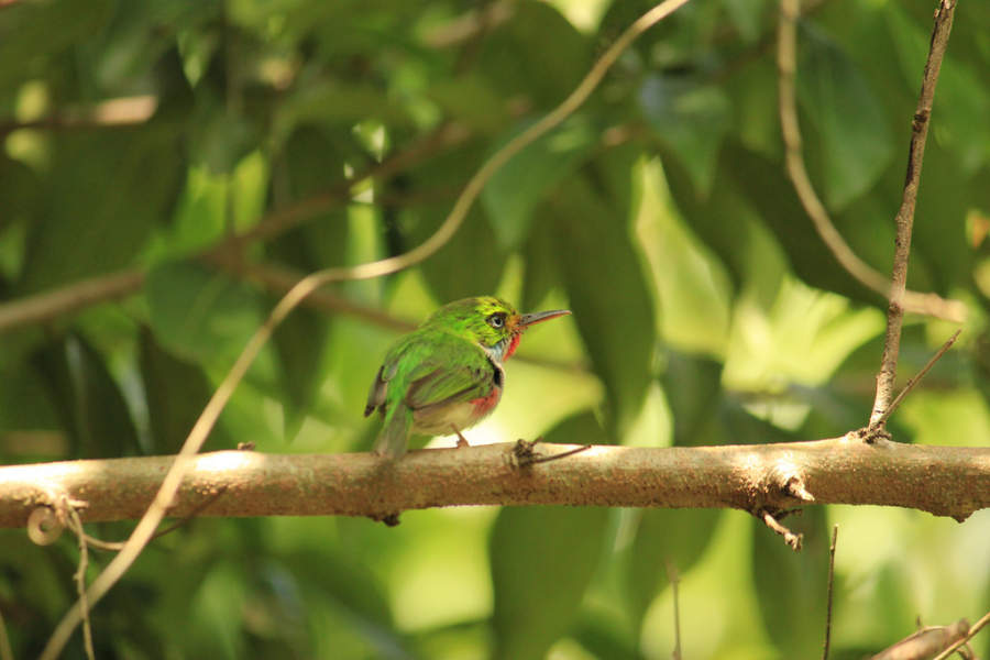 Colorido pájaro en Baracoa