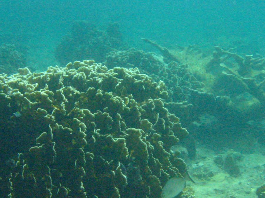 Coral en el mar de Santa Cruz del Norte