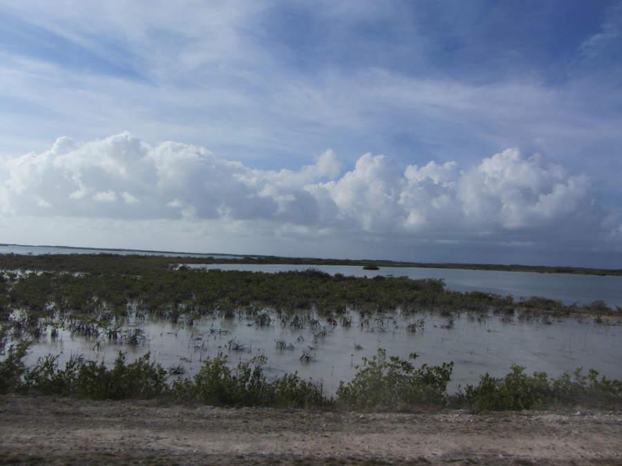 Cayo Santa María cuenta con abundantes manglares
