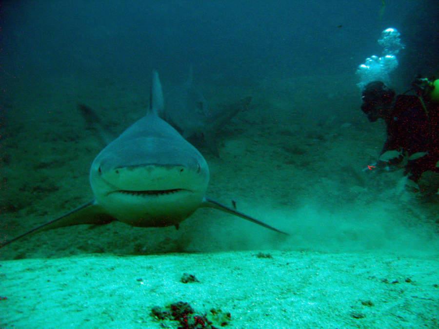 En Playa Santa Lucía se puede hacer snorkel y buceo