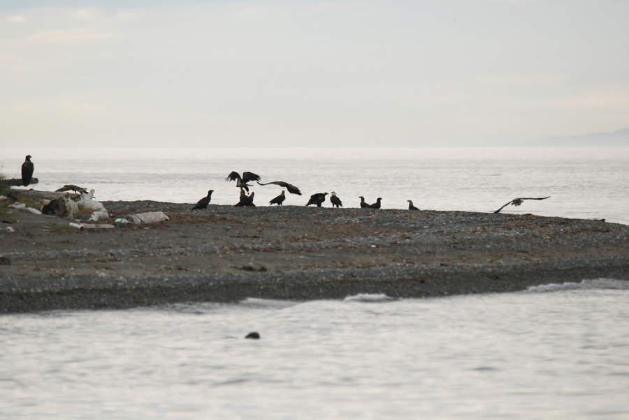 Aves marinas en la costa de Eagle Beach