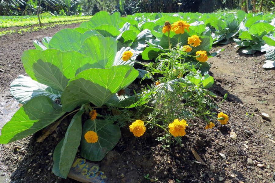 Pinar del Río tiene un jardín botánico