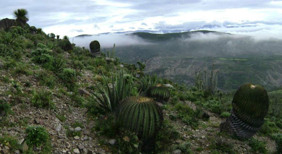 Panorámica de la Reserva de la Biosfera Tehuacán-Cuicatlán