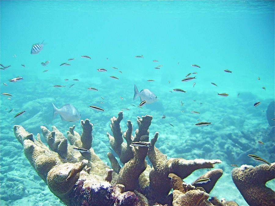 Akumal cuenta con una extensa fauna marina y arrecifes