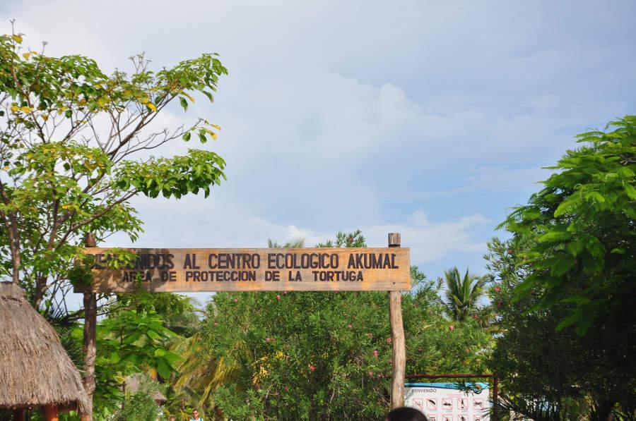 Akumal cuenta con un centro de protección para tortugas