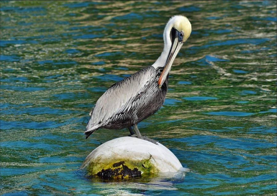Fauna en las playas de Puerto Aventuras