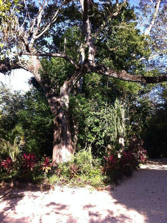 Cerca de Playa Paraíso se ubica la reserva ecológica de Kantun-chi