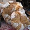 Pan de payés,Molins de Rei, Spain